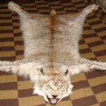 Ковер из рыси (121 см)