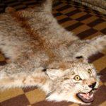Ковер из рыси (114 см)
