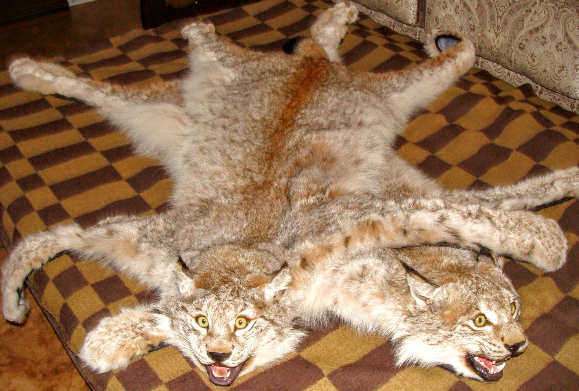 ковры из меха рыси